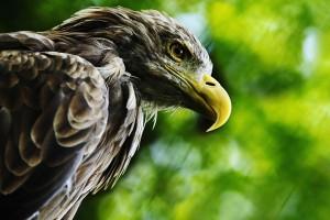 鳥の目で決算書を見る
