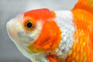 「魚の目」で市場の流れを読む